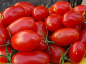 Click to enlarge Small Roma Tomatoes