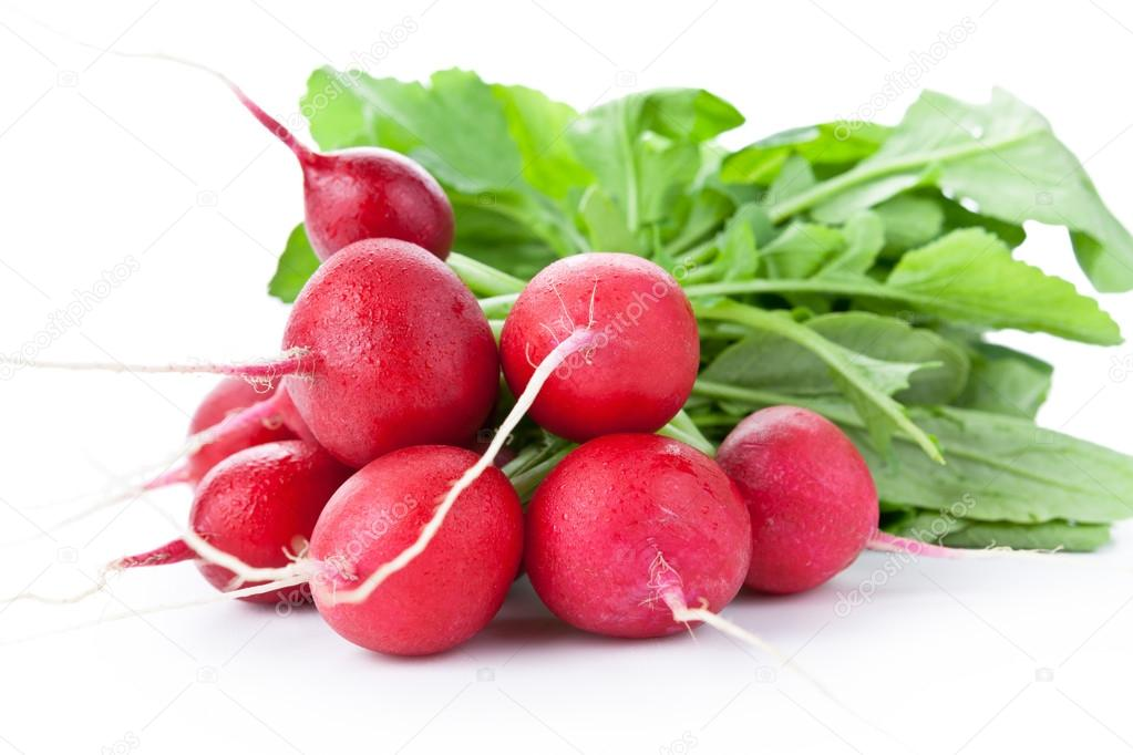 Click to enlarge Radish Bunch - Red Rover