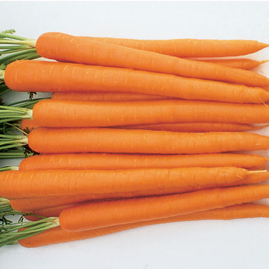 Click to enlarge Carrots