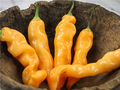 Click to enlarge Sugar Rush Hot Pepper Seedling