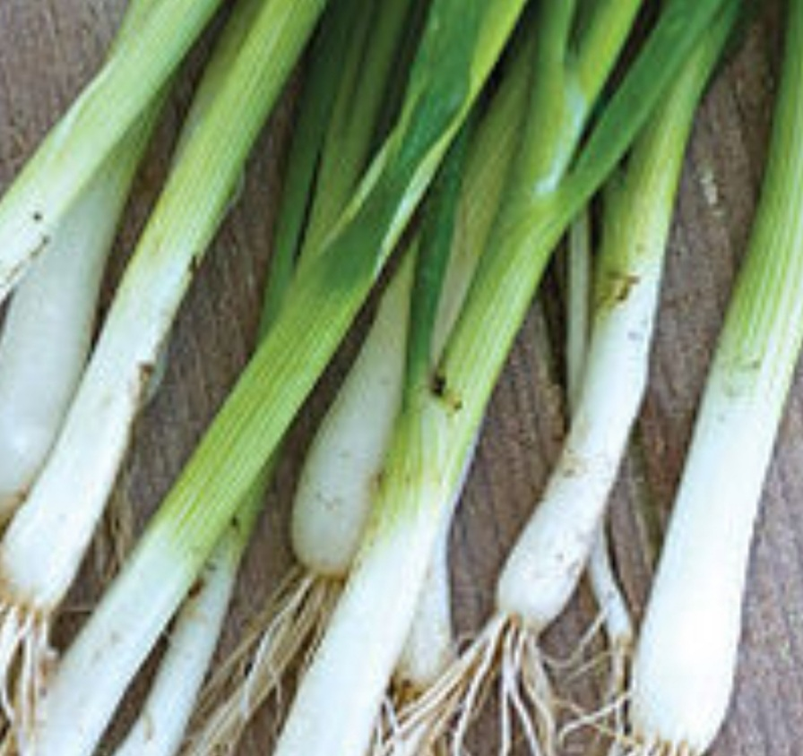 Click to enlarge Green Onions