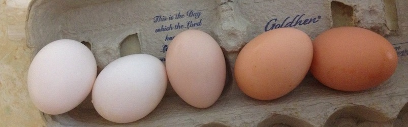Click to enlarge Eggs - one doz free range (straight run)