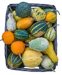 Click to enlarge Small Decorative Gourds