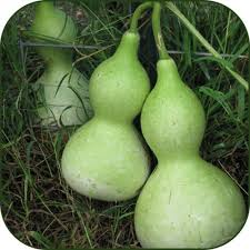 Click to enlarge Birdhouse Gourd