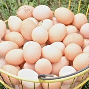 Click to enlarge Eggs, Large, Free Range, Brown