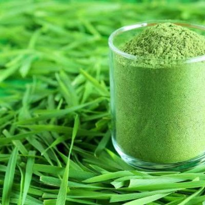 Click to enlarge Wheat Grass Dried Powder/Flakes