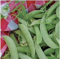 Click to enlarge Amish Snap Pea Seed Packet