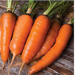 Click to enlarge Danvers Carrot Seed Packet