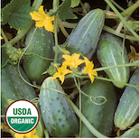 Click to enlarge Bushy Cucumber Seed Packet (Certified Organic)