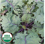 Click to enlarge Red Russian Kale Seed Packet (Certified Organic)