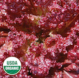 Click to enlarge Lolla Rossa Lettuce Seed Packet (Certified Organic)