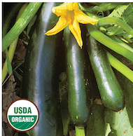 Click to enlarge Black Beauty Zucchini Squash Seed Packet (Certified Organic)