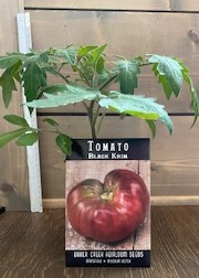 Click to enlarge Black Krim Tomato Transplant