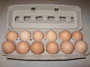 Click to enlarge Dozen Pasture Raised Brown Eggs fed Non-GMO Feed (Large)