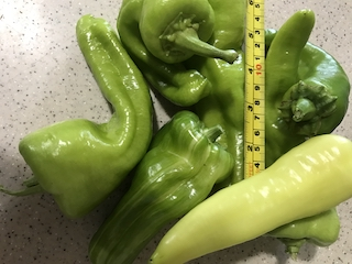 Click to enlarge Sweet banana peppers