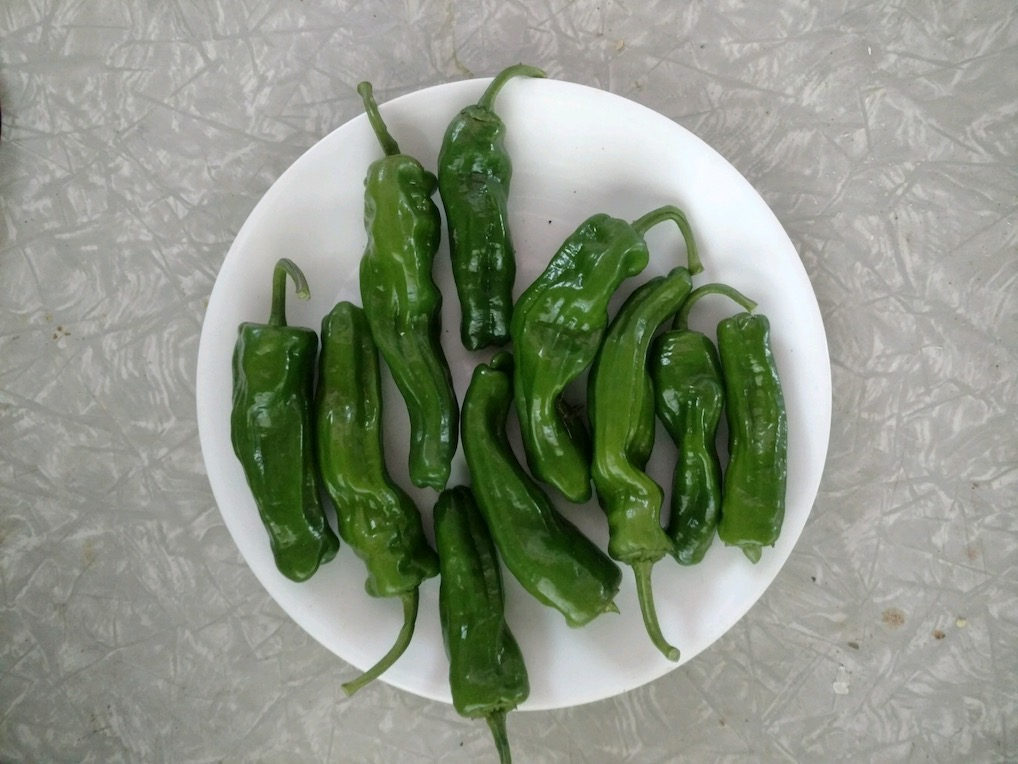Click to enlarge Shishito Peppers
