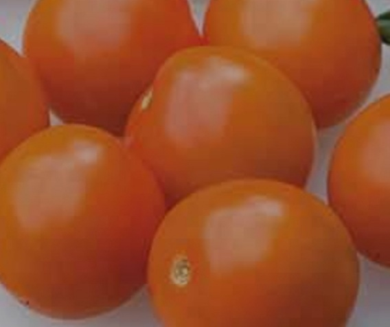 Click to enlarge Orange Cherry Tomatoes
