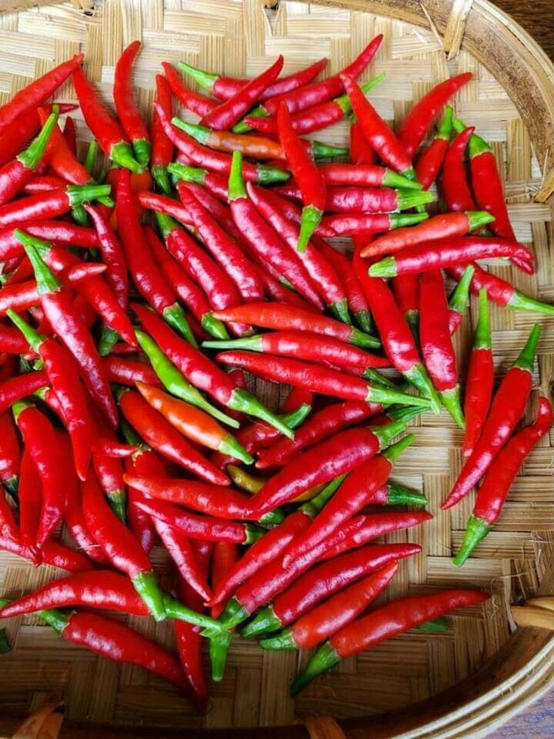 Click to enlarge Thai chilli peppers