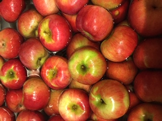 Click to enlarge Cortland Apples
