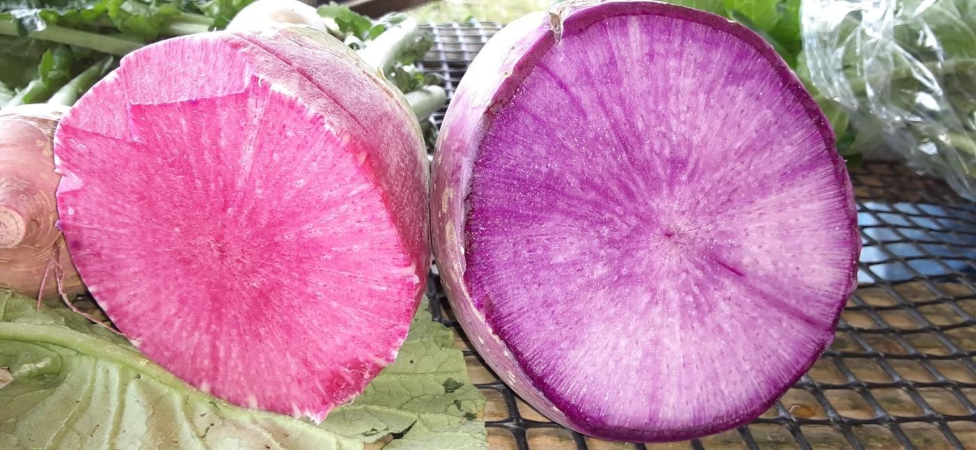 Click to enlarge Watermelon Radishes