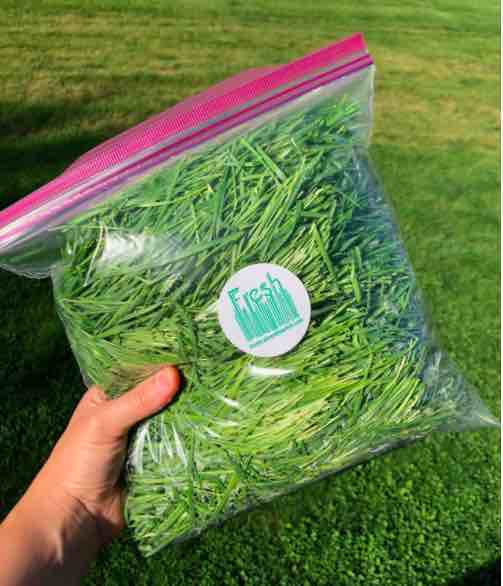 Click to enlarge Fresh Wheatgrass by the Bag