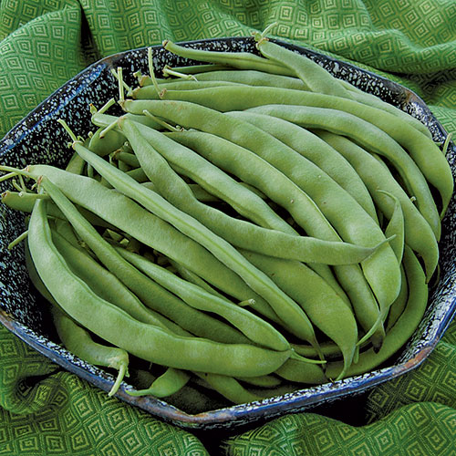 Click to enlarge Bountiful Bush Beans Seed Packet