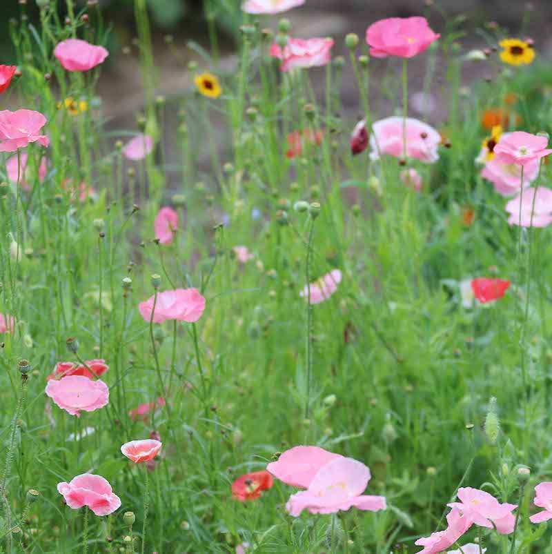 Click to enlarge Bee Feed Mix Flower Seed Packet