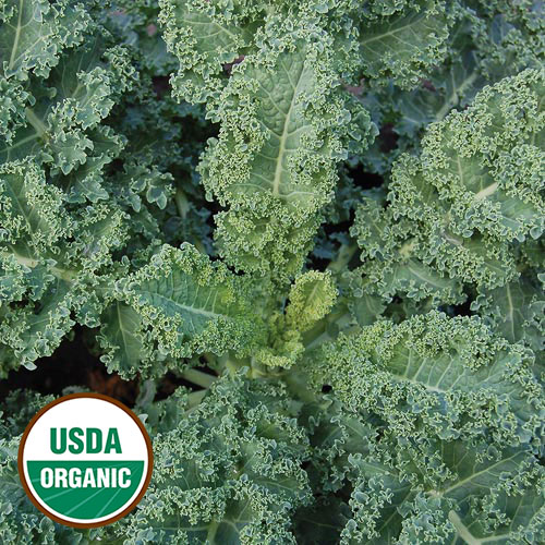 Click to enlarge Dwarf Blue Curled Kale Seed Packet (Certified Organic)