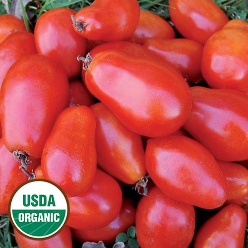 Click to enlarge Martino's Roma Tomato Seed Packet (Certified Organic)